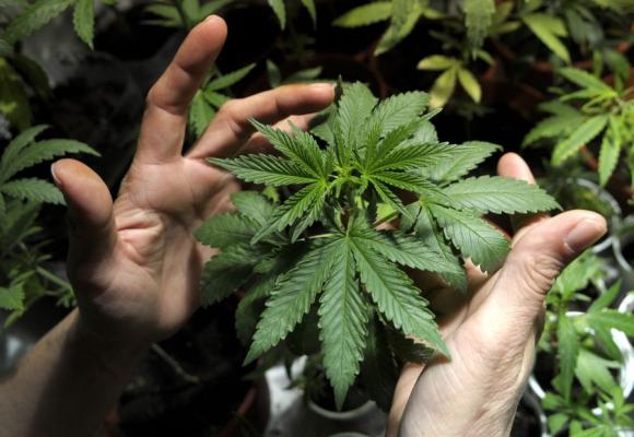 Marihuana es legal.