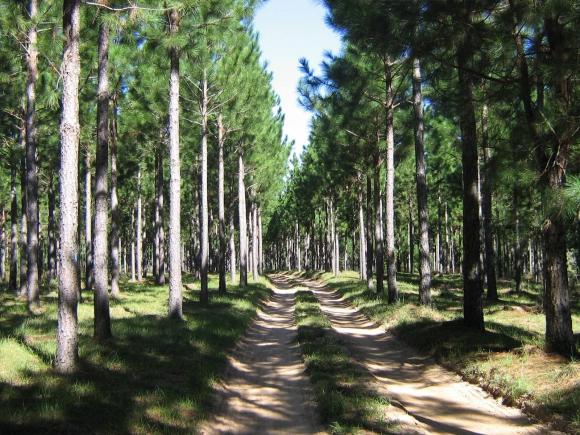 Empresa forestal uruguaya fue reconocida por FAO.