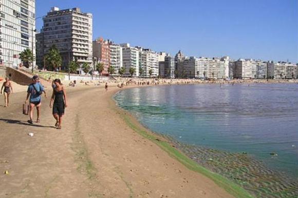 Cianobacterias en las playas. Foto: IMM