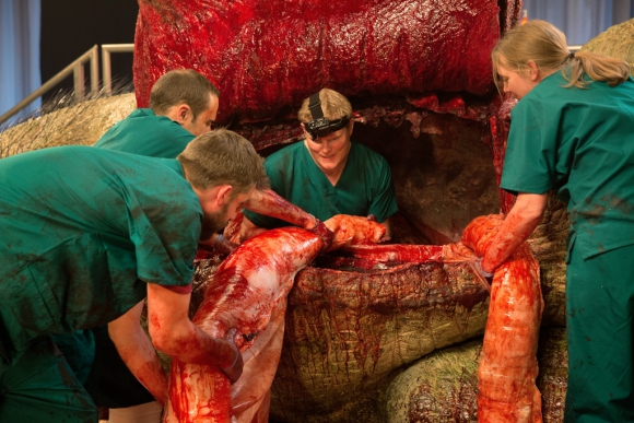 Examinan los intestinos. Foto: Nat Geo
