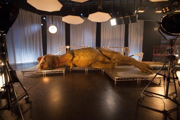 El animal reproducido en el estudio de televisión. Foto: Nat Geo