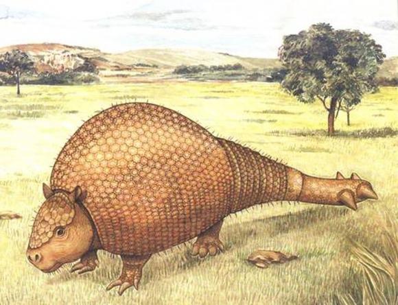 Los gliptodontes fueron mamíferos que vivieron en América, parecidos a tatúes, pero gigantes.