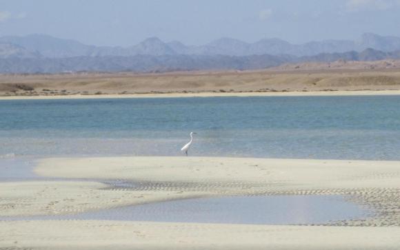 19 - Sharm El Luli (Marsa Alam, Egipto). Foto: Tizzx/Tripadvisor.