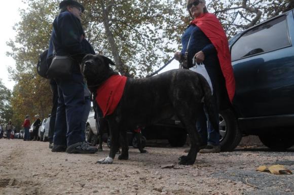 Perro en el acto del 1° de mayo de 2015. Foto: Francisco Flores