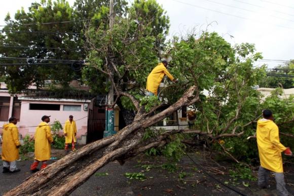 Árboles caídos en República Dominicana. Foto: Reuters.