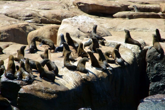 Isla de Lobos. Foto: Ricardo Figueredo