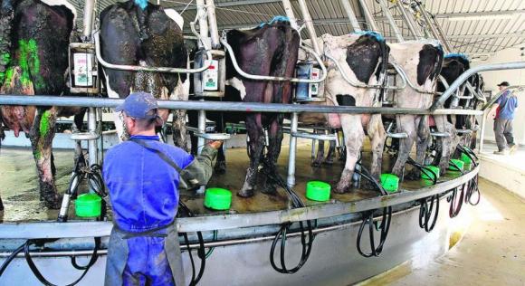Precios de lácteos en remates de Fonterra sieguen al alza y pueden elevarse más.