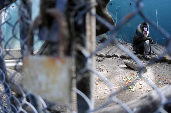 Recorrida por el Zoo de Montevideo. Foto: F. Ponzetto