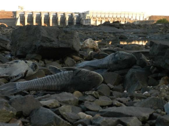 Otra cara del cambio: las sequías (Foto: Daniel Rojas)