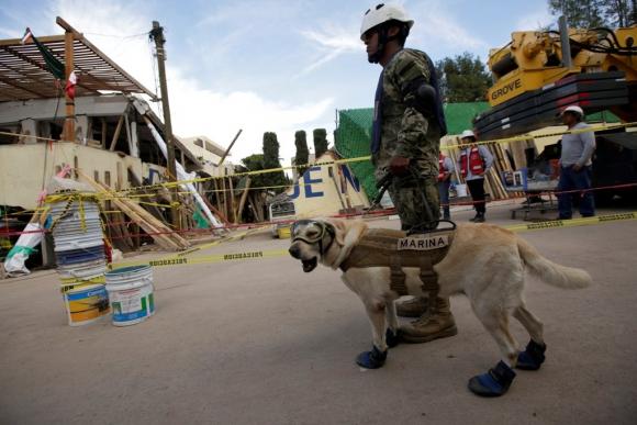 Frida, la perra rescatista. Foto: Reuters