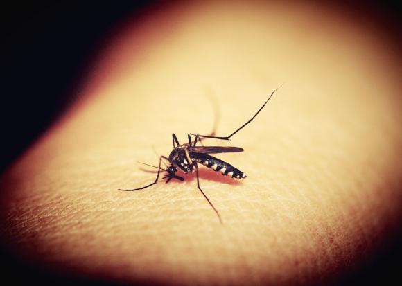 A medida que la temperatura vaya subiendo la presencia de mosquitos irá subiendo. Foto: Pixabay