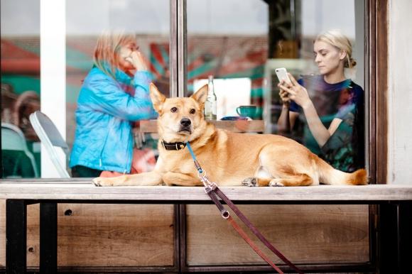 La tecnología hoy también transforma la vida de las mascotas. Foto: Pixabay