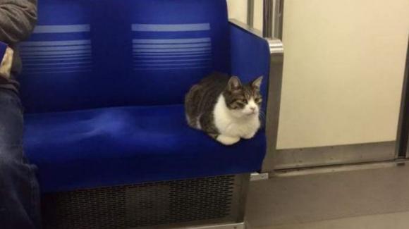 Gato Metro Tokyo