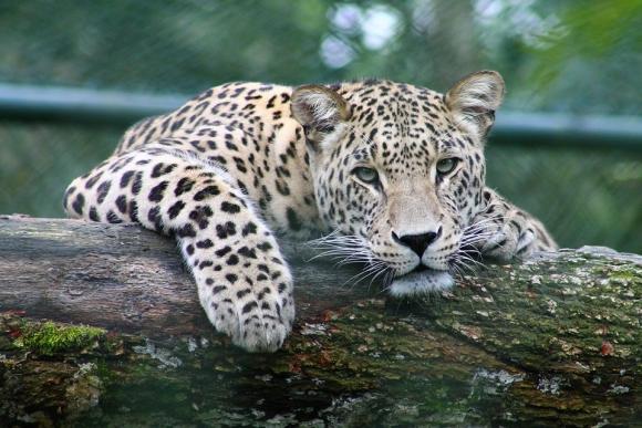 El estudio subraya que es importante saber dónde viven las especies. Foto: Pixabay