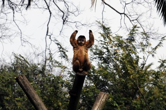 El zoológico de Villa Dolores cuenta con 400 ejemplares. Foto: F. Ponzetto