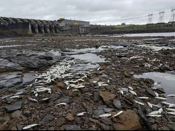 Miles de peces muertos en la represa de Palmar. Foto: Twitter @Agesor24hs