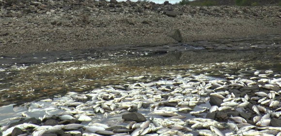 Mortandad: los peces van en esta época a desovar a la zona. Foto: Andrea Madera
