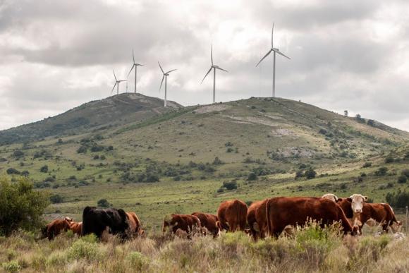 Son nueve los parques eólicos de Ventus habilitados para exportar. Foto: N. Pereyra