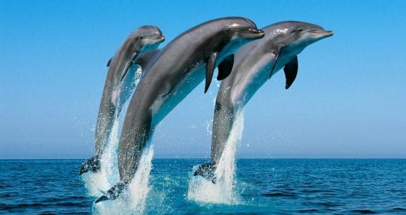 Ballenas y delfines se comportan como humanos