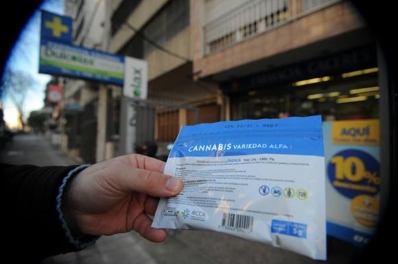 Marihuana se vende en farmacias. Foto: Fernando Ponzetto.