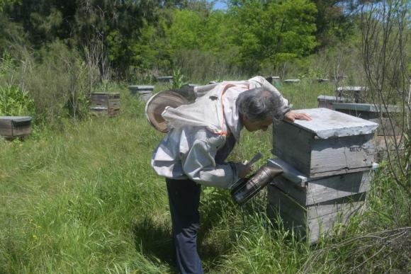 Riera, de la Sociedad Apícola del Uruguay, tiene 100 colmenas. Foto: F. Flores