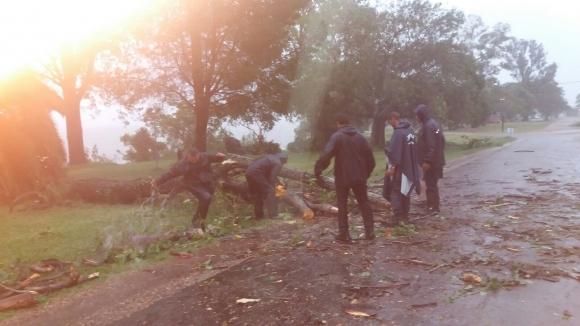 Personal autorizado debió retirar árboles que cortaban el camino. Foto: Luis Valerio