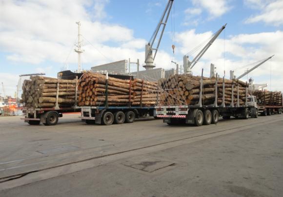 Embarques de madera de pino a granel. Foto: El País