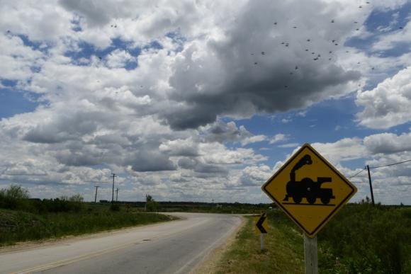 """UPM se compromete a mover 2 millones de toneladas por año en el """"Ferrocarril Central"""". Foto: Darwin Borrelli"""