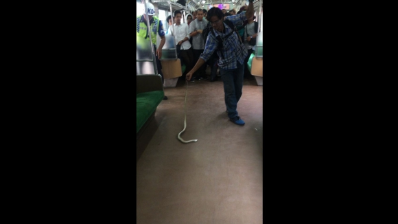 Hombre mata a una serpiente en un tren