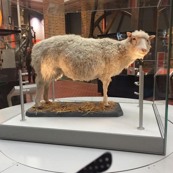 La oveja Dolly embalsamada en el Royal Museum of Scotland