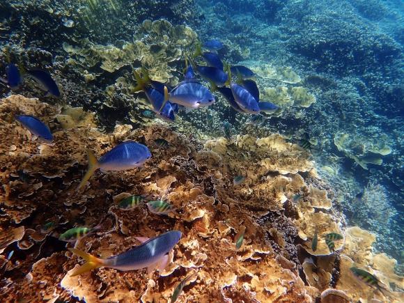 Gran barrera de coral. Foto: Pixabay