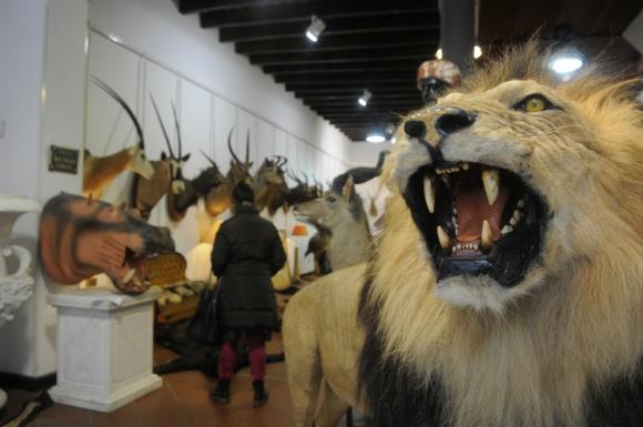 El remate de trofeos de caza mayor. Bavastro llegó a ser amenazado. Foto: Archivo El País