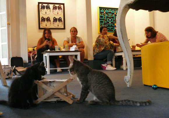 Novedoso: los animales pueden verse desde la vidriera. Foto: R. Figueredo
