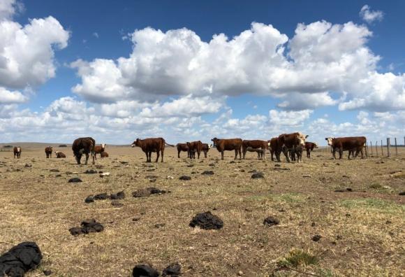 Sequía en Tacuarembó. Foto: @LuisLacallePou