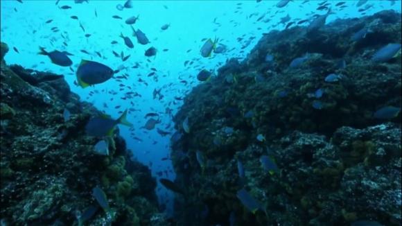 Chile tiene un parque marino en Juan Fernandez del tamaño de Ecuador