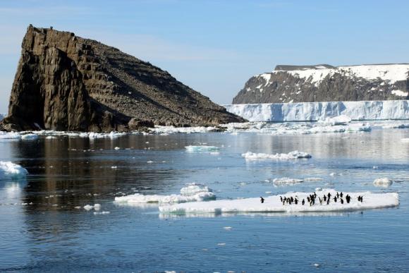 Hallan colonia de 1,5 millones de pingüinos adelaida en la Antártida