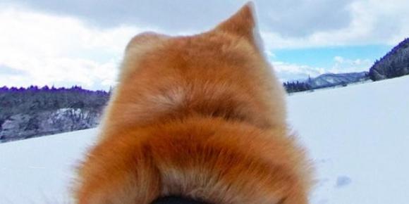Perros Akita recorrido Google Maps