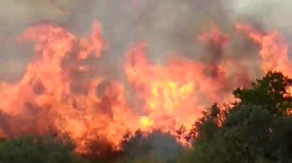 Incendio en Minas. Foto: Captura