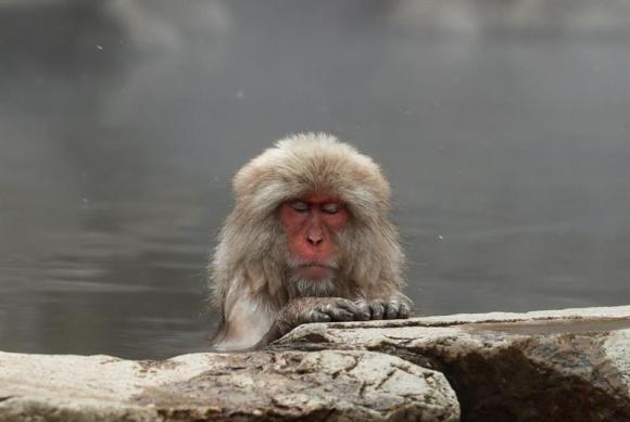 Los Populares Monos De Nieve Japoneses Alivian Su Estrés Con Aguas