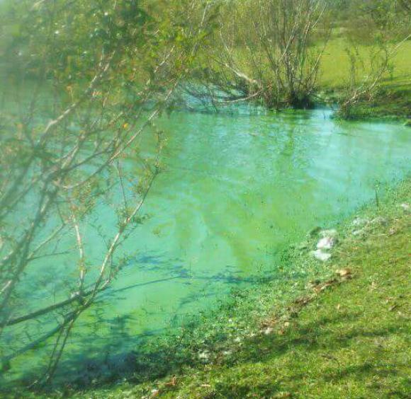 Cianobacterias en el río Negro. Foto: Víctor Darwin Rodríguez