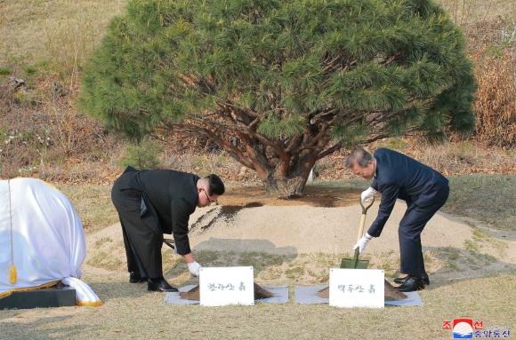 Los líderes de las dos Coreas plantaron un árbol por la paz. Foto: AFP