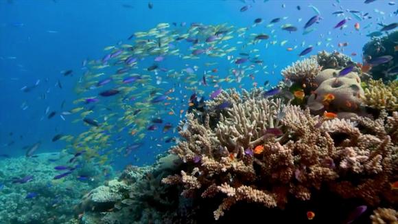 c6739a324786 La Gran Barrera de Coral ha superado cinco episodios mortales en ...