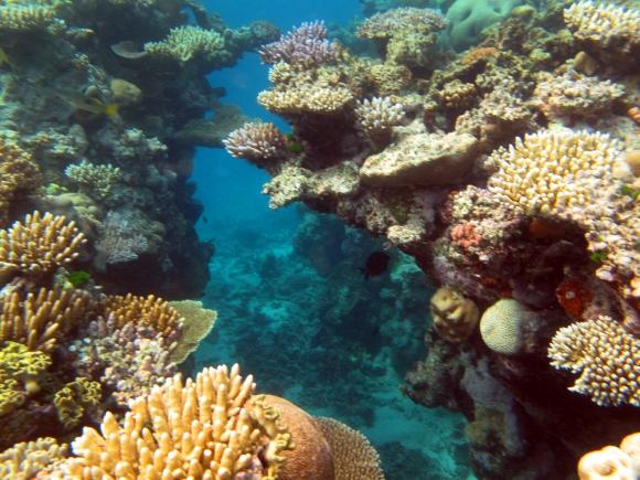 Los corales de latitudes altas se autorregulan para soportar el frío -  24/05/2018 - EL PAÍS Uruguay