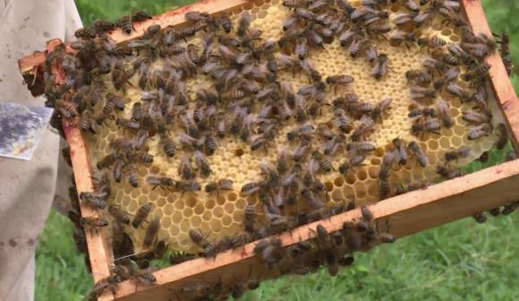 abejas. Foto: AFP