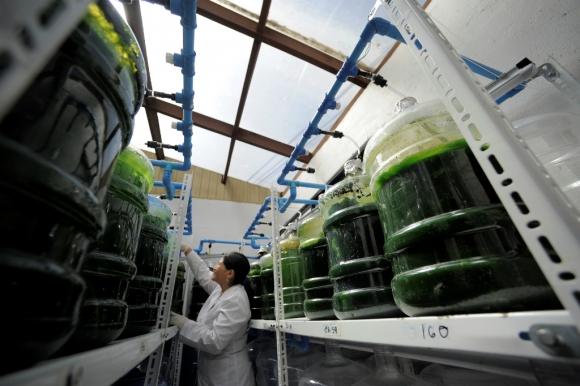 La novedosa técnica podría recortar entre un 12 y un 15 por ciento las emisiones totales en la producción de vino. Foto: Reuters