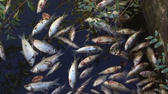 Peces muertos en Cerro Largo. Foto: Néstor Araújo
