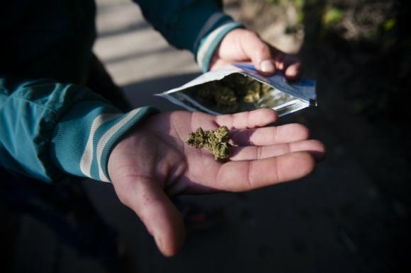 En las farmacias se venden dos variedades de marihuana. Foto: Fernando Ponzetto