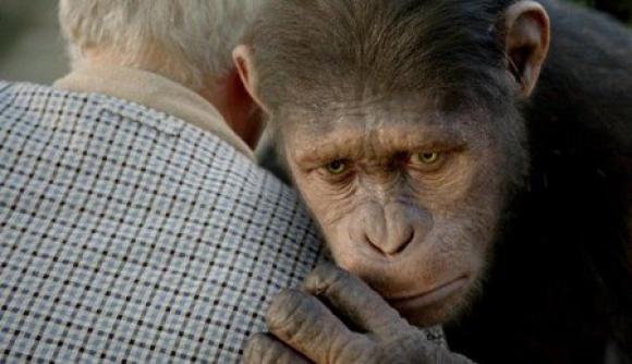 Imagen de la película El planeta de los simios: (R)Evolución
