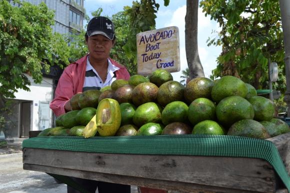 aebbdd8b1cec La palta vietnamita es posible rival de México en EE.UU. debido a ...