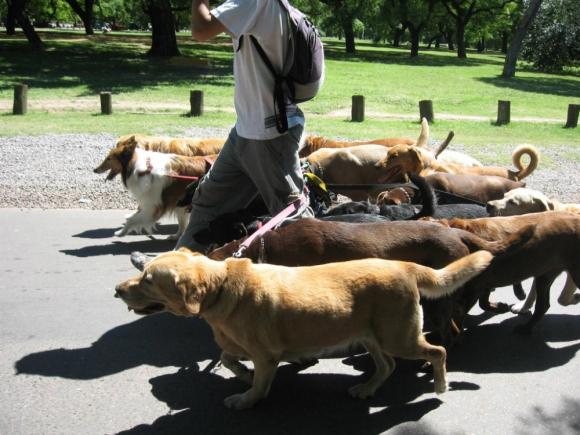 Paseo con perros
